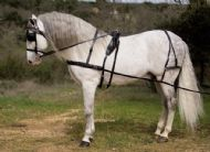 Leather driving harness with breastplate - Kiel